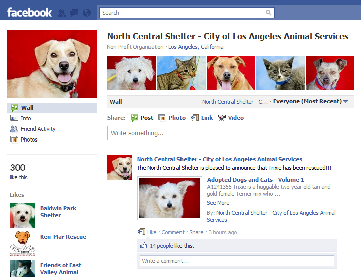 North Central Animal Shelter S New Facebook Page Echo Park Now